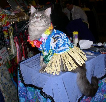 Neroon in his hula outfit